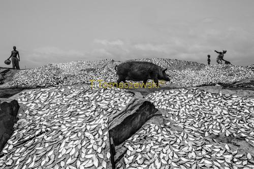 Suszenie ryb na plaży w miasteczku Elmina, Gana. Drying fish on the beach in the town of Elmina, Ghana.